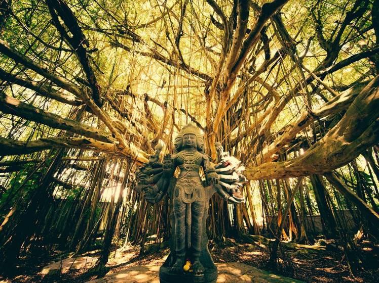 shiva-tree-temple_93176_990x742.jpg